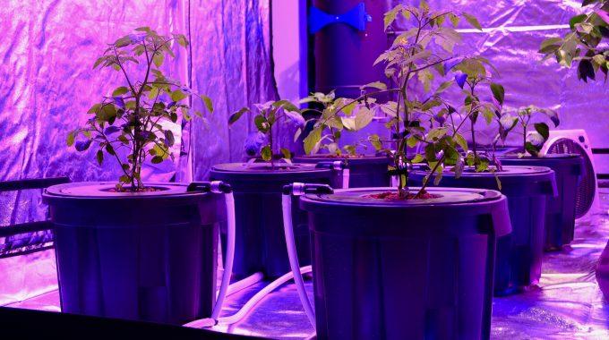 Aquaponik – nachhaltige Technologien, moderne Berufe